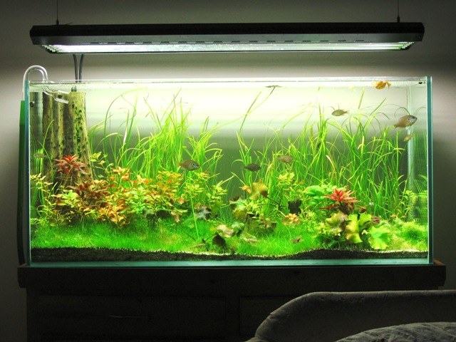 Building a 75g all glass tank - The Planted Tank Forum