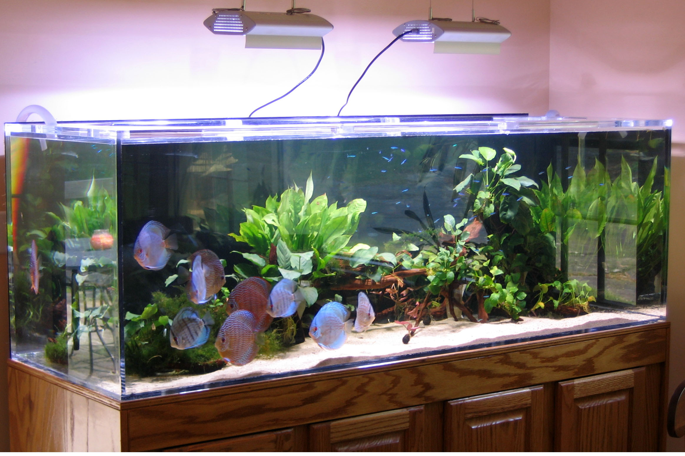 Fish aquarium price in pakistan - Discus Aquarium