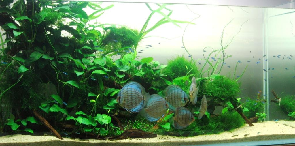 Fish Discus Thr...